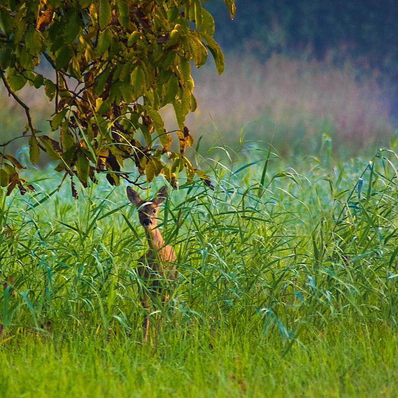 michael sauer naturfotografie neuheiten und aktuelles